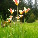 Mendocino garden